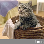 "Iams ""Hide And Seek"""