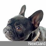 "NexGard ""Dogs In Your Face"""